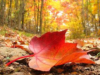 Осень, осень в гости просим